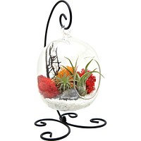 "Bliss Gardens Air Plant Terrarium Kit with 6"" Oval Glass / Geode Crystal/ Sunburst On Ice / Small Black Metal Stand Included"