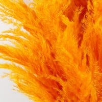 "Dried Pampas Grass in Bright Orange - 5 Stems per Bunch - 30""-42"" Tall"