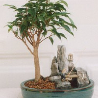 Ficus-Stone Landscape Scene with Fishing Pole(ficus compacta)