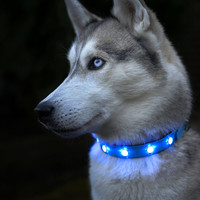 Do You Love Dogs? Get this LED Light-up Collar Dog Flashing Glow In The Dark