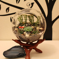 Adorable Hanging Succulent and Cactus Glass Terrariums Natural Garden with moss and mushroom decor
