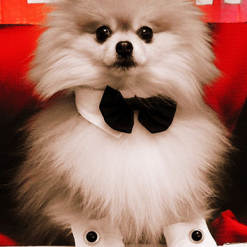 Wedding or any Event Bow Ties Handmade for that Special Dog or Cat Bow tie cuff combo pet photo prop