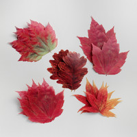 Parchment Paper Fall Leaves - World Market