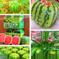 100pc/lot Free shipping, Outdoor Plants Fruit Seeds  Simple Geometric Square Watermelons Seeds, Summer fun