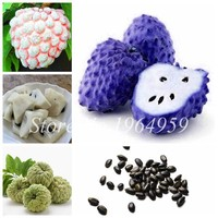 20 Pcs/Pack Bonsai Soursop, Graviola, Annona Muricata, Annonacin,Professional Packing,Heirloom Organic Delicious Fruit Plants