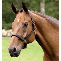 Classic Leather Halter | Dover Saddlery