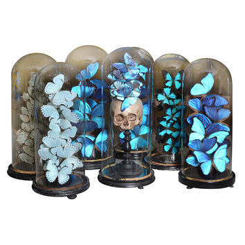 Set of 19th Century Century Glass Domes With Collections
