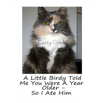 Catty Cards Greeting Cards. Karma the Cat Eats the Bird. Blank Happy Birthday Card. Funny and Humorous Paper Goods for Family Friend Bday
