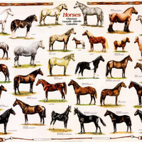 Horse Painting, Horse Drawings, Horse Picture, Horse Art, Horse Pictures
