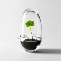 Grow Mini Greenhouse by Design House Stockholm | The Modern Shop