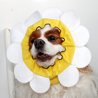 Daisy Flower Dog Snood / Stay-Put 3 Rows Elastic Thread / Pet Hat / Long ear covering / Specialty Snood