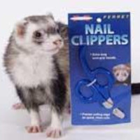 Marshall Pet Ferret Nail Clipper