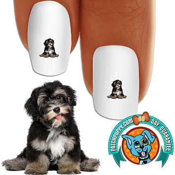 Havanese Love - Nail Art (NOW 50% MORE FREE)