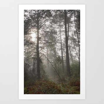Calm morning... Into the foggy woods by