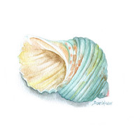 Green Turbo Seashell Watercolor Painting - Giclee - 8 x 10 - Summer Beach Painting