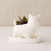 Puppy Succulent Planter | Urban Outfitters