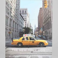 The New York Dog By Rachael Hale- Assorted One