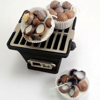 Macadamia Nuts Shells Fire Starters 6 Large with Shipping Included