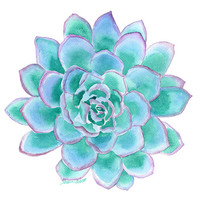 Teal Succulent Watercolor Painting - 8 x 10 - Giclee Print