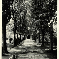 1922 Print Tree Lined Path William Shakespeare Burial Holy Trinity Church NGM2