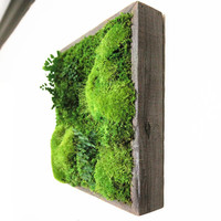 """12""""x12"""" Artisan Moss Plant Painting- No Care, Moss Wall Art. Real Preserved Plants.  Reclaimed Wood, Moss and Fern"""