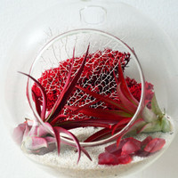 Air Plant Terrarium - Hanging Glass Orb - red reindeer moss - white sand /sea fan - Home and Garden -  Green Gift