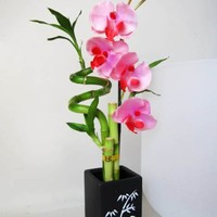 9GreenBox - Lucky Bamboo - Spiral Style with Artificial Flowers and Ceramic Vase
