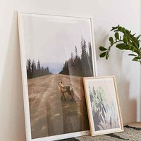 Kevin Russ Road Fox Art Print
