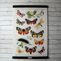 """Large Canvas School Science Botanical Chart Vintage Pull Down Style with Oak Wood Poster Print Hanger -  Butterfly Chart (24.5"""" x 37"""")"""