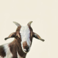 Goat Portrait Art Print by The Moon And Mars