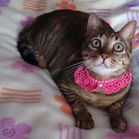 Cat crochet collar peter pan style, cat accessories with bead application