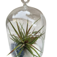 Short Clyinder Airplant Terrarium
