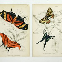 Butterfly Engraving by William Lizars - A Pair