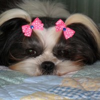 Puppy Dog Bows 20 Extra Small to Small All Pairs