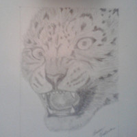 Snow Leopard - Original Pencil Drawing - Hand Signed