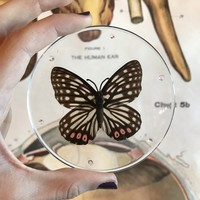 Red Ring Skirt Butterfly Coaster