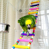 Bird Parrot Toys Ladders Swing Chewing Toys Hanging Pet Bird Cage Accessories Hammock Swing Toy for Small Parakeets Cockatiels, Lovebirds, Conures, Macaws, Lovebirds, Finches (12 Ladders)