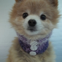 Dog scarf hand crocheted purple cowl neck warmer made for a small Chihuahua