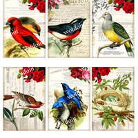 Colorful Bird Printable Collage Sheet with Red Blue Birds Nest Eggs Vintage Backgrounds Image Transfers Decoupage Papers Instant Download