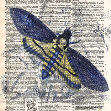 Insect illustration, death moth, butterfly art, dictionary art print