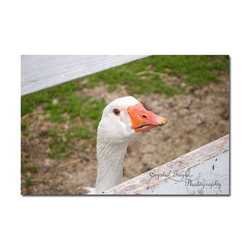 Goose Kitchen Rustic Decor Print Farm Animals White Feathers Country Chic Greeting Card To Do List Erasable Planner