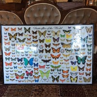 Butterflies of the world Print with frame