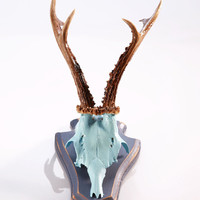 """Stylish wall sculpture: Deer Antler with scull, mounted-horn """"Paul"""""""
