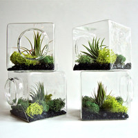 Stackable Living Eco Cube