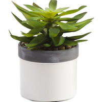 6.5in Faux Succulent - Living Room - T.J.Maxx