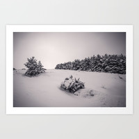 """""""Sierra Nevada snow pines"""" . Into the woods. by Guido Montañés"""