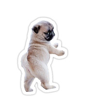 'Pug Puppy' Sticker by whistle48sho