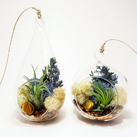 """Bliss Gardens Air Plant Terrarium with 4"""" Round Glass or 7"""" Teardrop Glass / Juniper Sprigs / Gold Nugget and Juniper Forest Moss /"""