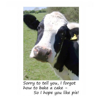 Catty Cards Greeting Cards. Bessie the Black and White Milk Cow Can't Cook And Wants to Bake You a Pie. Funny Birthday Card. Animal Card