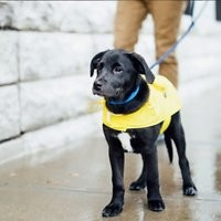 Fab Dog Travel Raincoat
